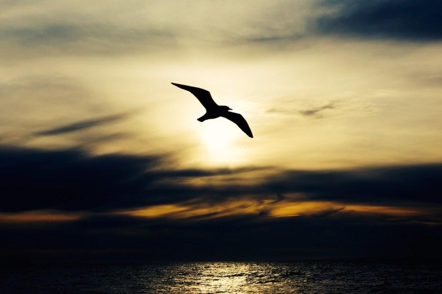 seabird-768584_1280