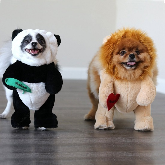 Panda Puppy Dog and Pet Costume Set