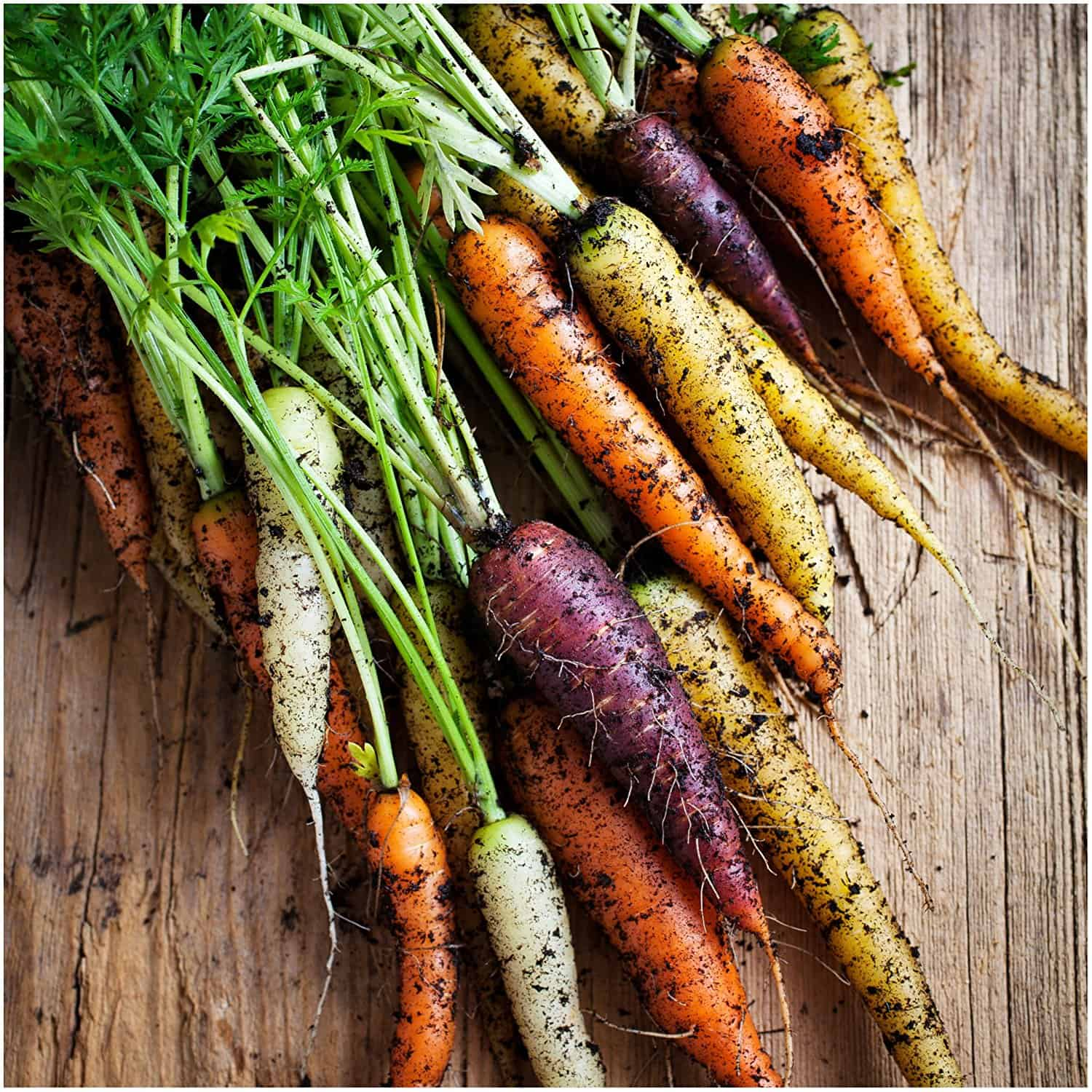 Carrot Rainbow Blend Seeds