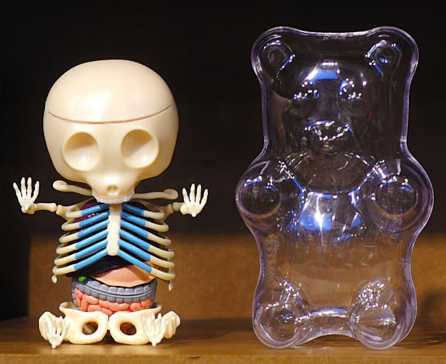 Old Fashioned Gummi Bear Anatomy Collection Anatomy And Physiology