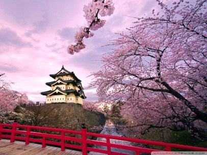 cherry blossoms_pagoda