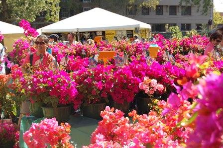 flower fest (2/6)