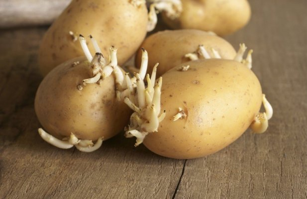 krompir1