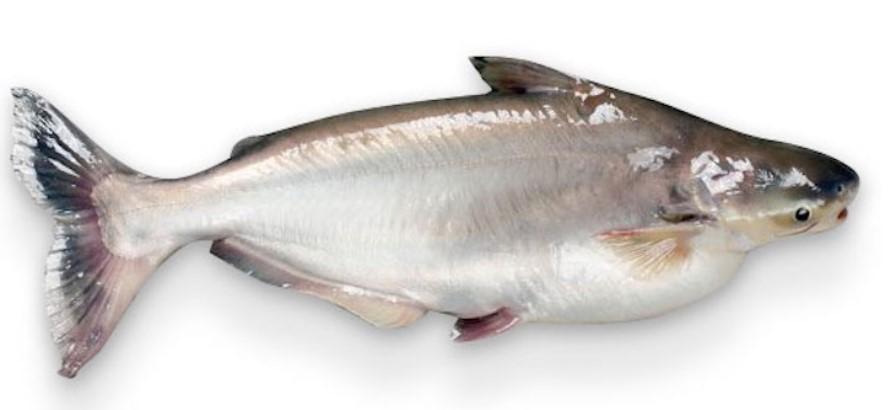 Не купувайте тази риба: Всички я продават, но трябва да бъде забранена (СНИМКИ)