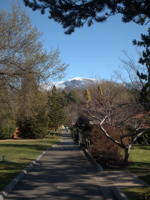 View of Mount Wellington / kunanyi from the Royal Tasmanian Botanical Gardens