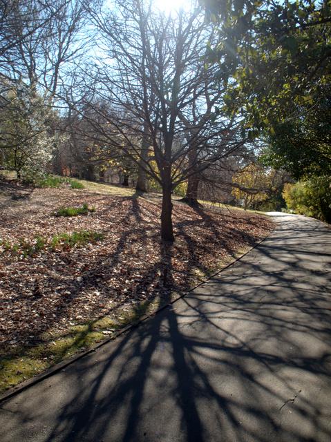 Winter in the Royal Tasmanian Botanical Gardens