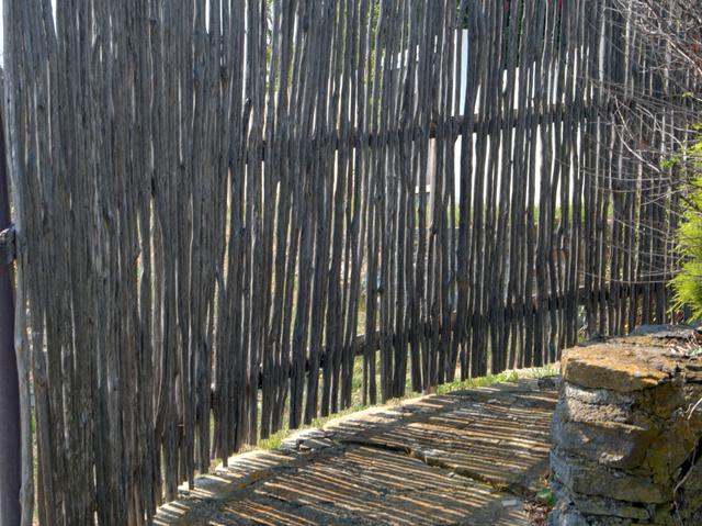 Tea tree fence