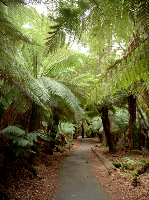 The path to Russell Falls at Mount Field National Park is accessible even to wheelchairs