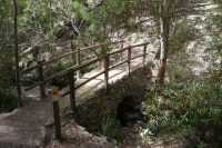 A bridge on the Cascades Track through the foothills of Mount Wellington / kunanyi, South Hobart