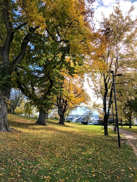Autumn in Saint Davids Park, Hobart