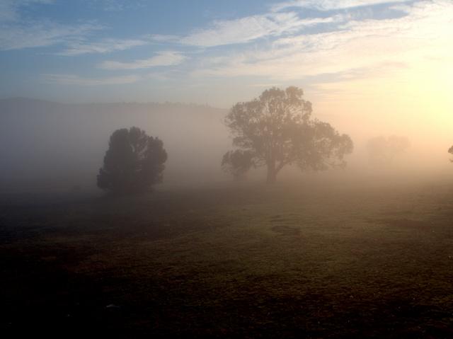Dawn at Curringa Farm