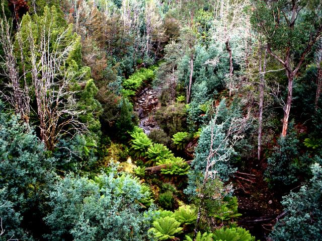 Creek below Tarraleah Falls in Central Tasmania