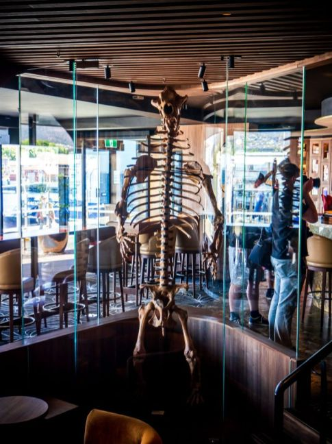 A fossil on display at the Evolve Spirit Bar