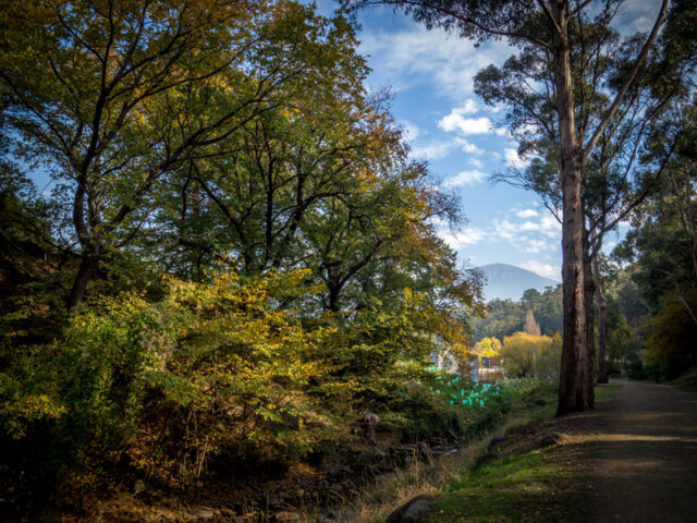 Autumn along the Hobart Rivulet in South Hobart