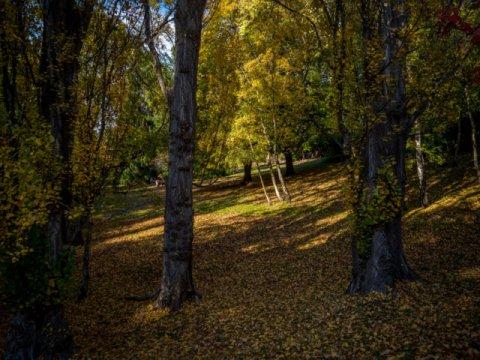 Autumn in Cascade Gardens, South Hobart