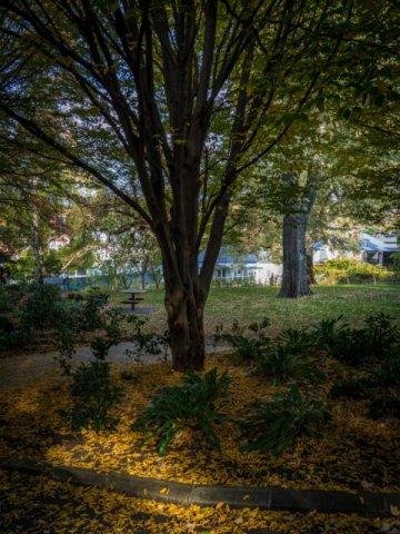 Autumn in Fitzroy Gardens, South Hobart