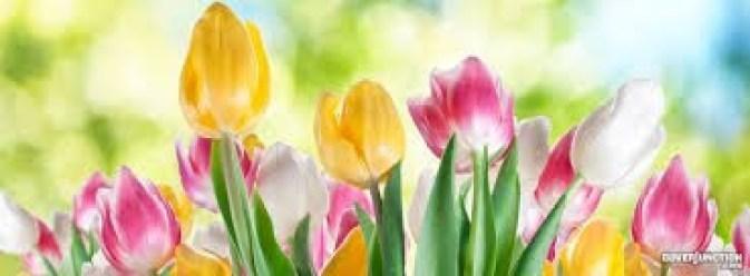spring-time-header