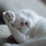 cat-800760_960_720
