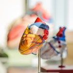 heart-2607178_960_720