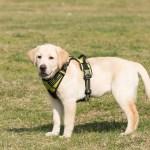 puppy-3014054_960_720