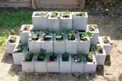 cinder block strawberry planter strawberries plants grown faring delicious far well been