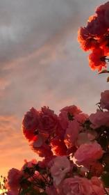 pink flowers #style Nature aesthetic, Flower wallpaper