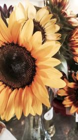 Pin by Mary Skiver on Phone Wallpapers Sunflower iphone