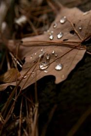 brown aesthetic fall leaves dark chocolate colors autumn warm nature shades falling colour earth backgrounds ana rosa cell rain texture