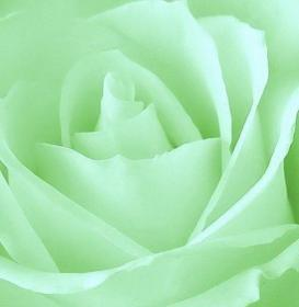Colors ~ Pale Green Flower aesthetic, Green aesthetic