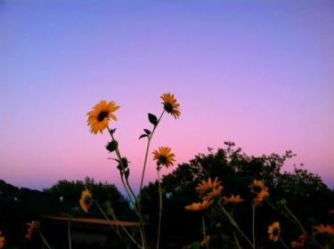 backgrounds aesthetic indie grunge flowers wallpapers google