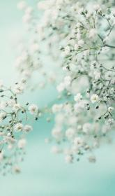 aesthetic mint pastel iphone phone paper nature flower wallpapers garden flowers floral