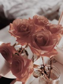 aesthetic rose flower brown flowers grunge backgrounds roses wallpapers angel kissed loved created she symphony reblog