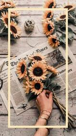 aesthetic iphone wallpapers sunflower phone background yellow quotes instagram screen vibes