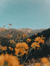 aesthetic nature iphone wallpapers flower yellow