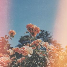 aesthetic playlist flower peach flowers covers backgrounds wallpapers heart sky themes
