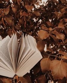 aesthetic brown leaves autumn instagram background rustic beige fall books colors pink wallpapers character libraries hope