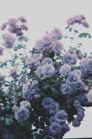 Pin by Ann Vu on For moodboard Lavender aesthetic