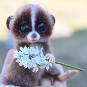 thing cutest ever