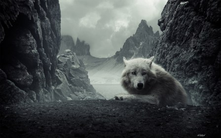 wolf hd wallpapers background