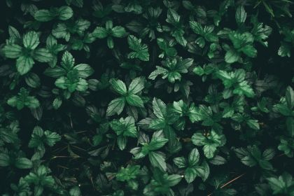 aesthetic wallpapers grey backgrounds leaf plant wallpaperaccess