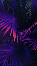 aesthetic wallpapers hd backgrounds neon iphone bright aesthetics light purple cool sofyan iyan обои wallpaperaccess wall phones фиоРетовые jungle фоны