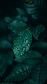 aesthetic dark nature leaf emerald wallpapers backgrounds greenery iphone cave leaves