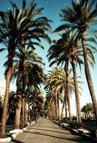 Download La Palm Trees Wallpaper Gallery