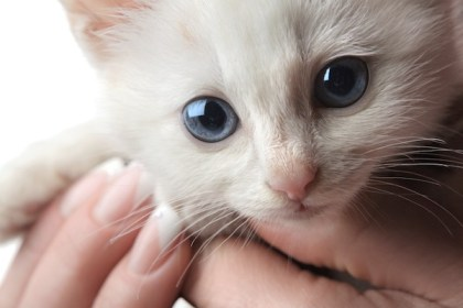 why squeeze want death science kawaii explains kittens shutterstock cats animals animal pet memes yahoo