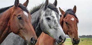 Como ter uma criação de cavalos