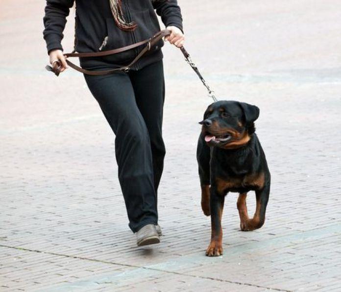 Ideias Para Ganhar Dinheiro Dog Walker