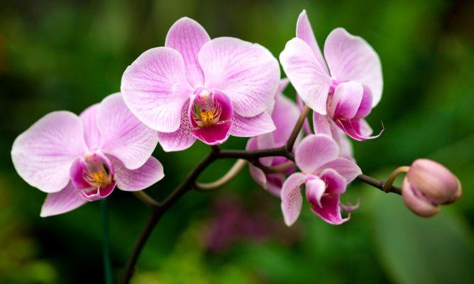 Manual Completo Como Cuidar de Orquídeas + BÔNUS