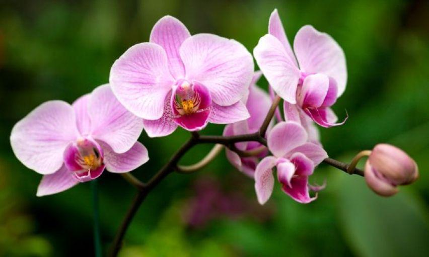 Livro Manual Completo Como Cuidar de Orquideas