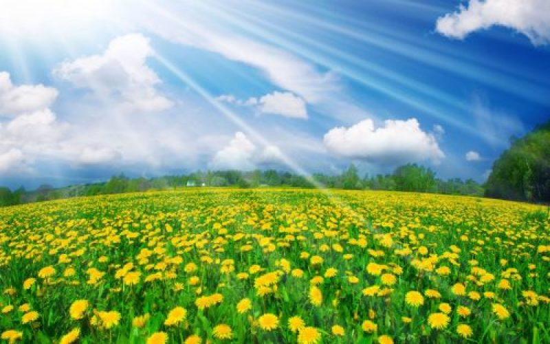 incredible_yellow_flowers_field-2880x1800