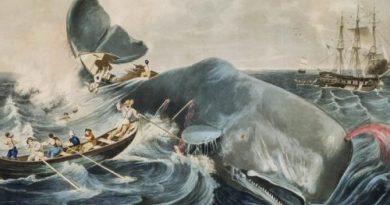 Доказана способность кашалотов топить корабли лобовым ударом